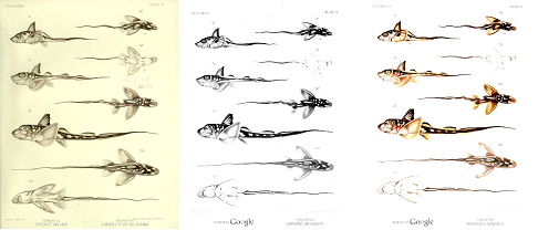Comparison of various color and bitonal images on the digital copies of Chimeroid Fishes